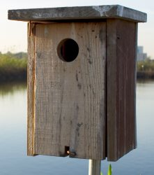 make sure you use the correct size for your birdhouse