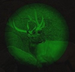 using night vision infrared binoculars to view elk