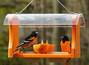 Fruit & Jelly Oriole Bird Feeder