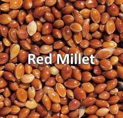 red millet bird seed