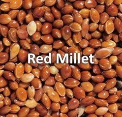 red millet bird seed