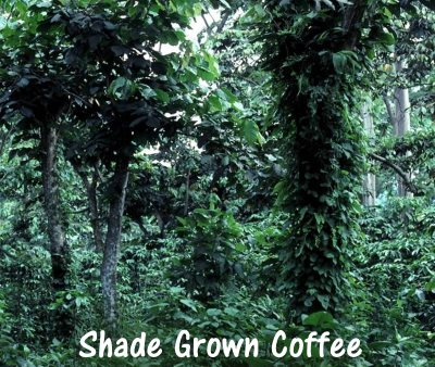 shade grown coffee plantations benefits birds
