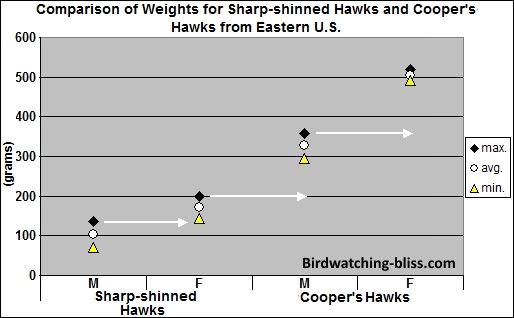 Sharp-shinned Hawks and Cooper's Hawks weight