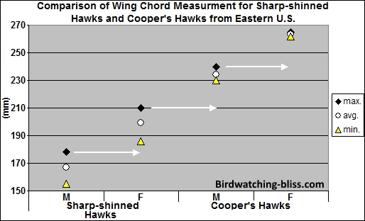 Wing Chord of Sharp-shinned Hawks and Cooper's Hawks