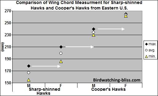 Coopers Hawk Vs Sharp Shinned Hawk Identification