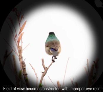 spotting scope eye relief needed for eyeglass wearers
