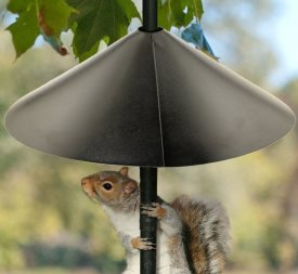 best squirrel baffle for bird feeders
