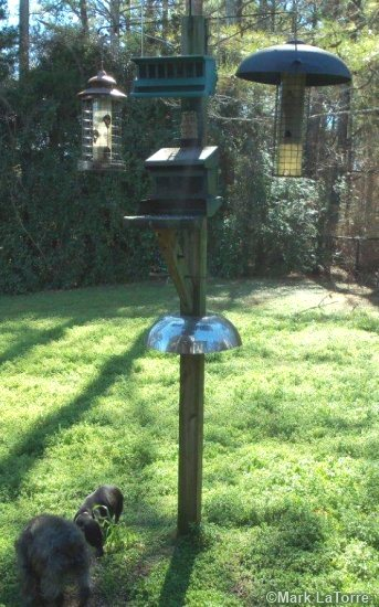 how squirrels feeder baffle netting proof of out to away gardener keep pole from bird squirrel and garden the feeders