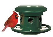 squirrel buster cardinal ring