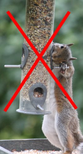 squirrel proof bird feeder fail