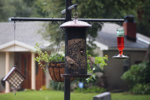 squirrel proof pole with feeders