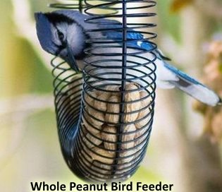 unshelled, whole peanut bird feeder attracts larger birds