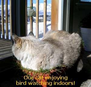 Cats Kill Birds - Keep 'em inside!