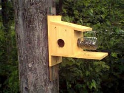 Free squirrel house plans