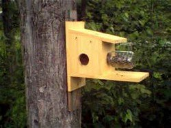 easy to build squirrel feeder plans